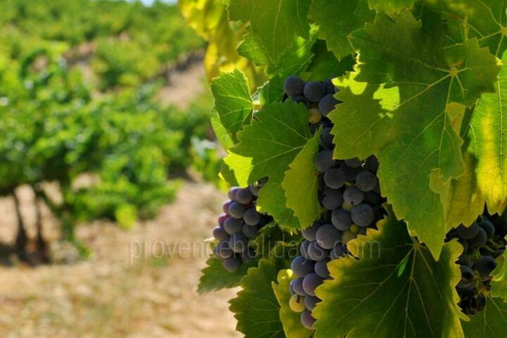 Guided Tours in Aix-en-Provence, Near Aix-en-Provence : Provence Wine and Luberon Villages