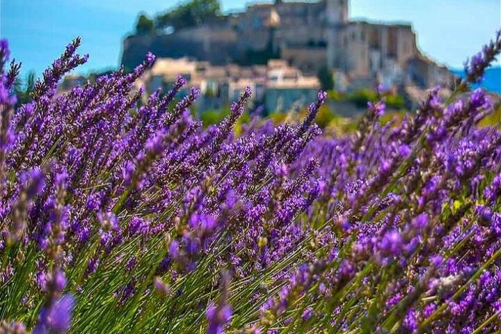Guided Tours in Aix-en-Provence, Near Aix-en-Provence : Lavender Tour Sault - Full Day