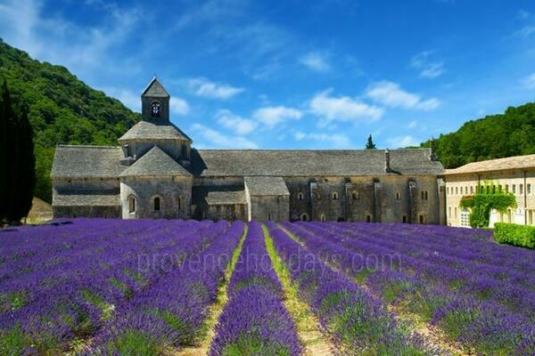 Guided Tours in Aix-en-Provence, Aix en Provence and surrounding area : Provence Tour - Senanque Abbey in Gordes