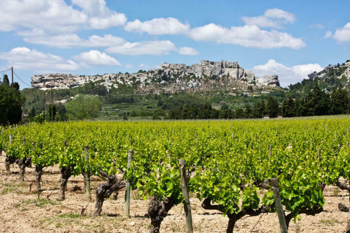 Wine Tours in Avignon, Near Avignon : Les Baux de Provence Tour from Avignon: Provencal Wine and Olive Oil