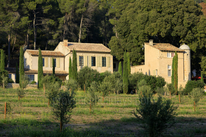 Luxury Holiday Rental in the Alpilles